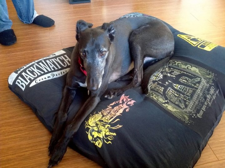 Black greyhound laying down on a t-shirt bed