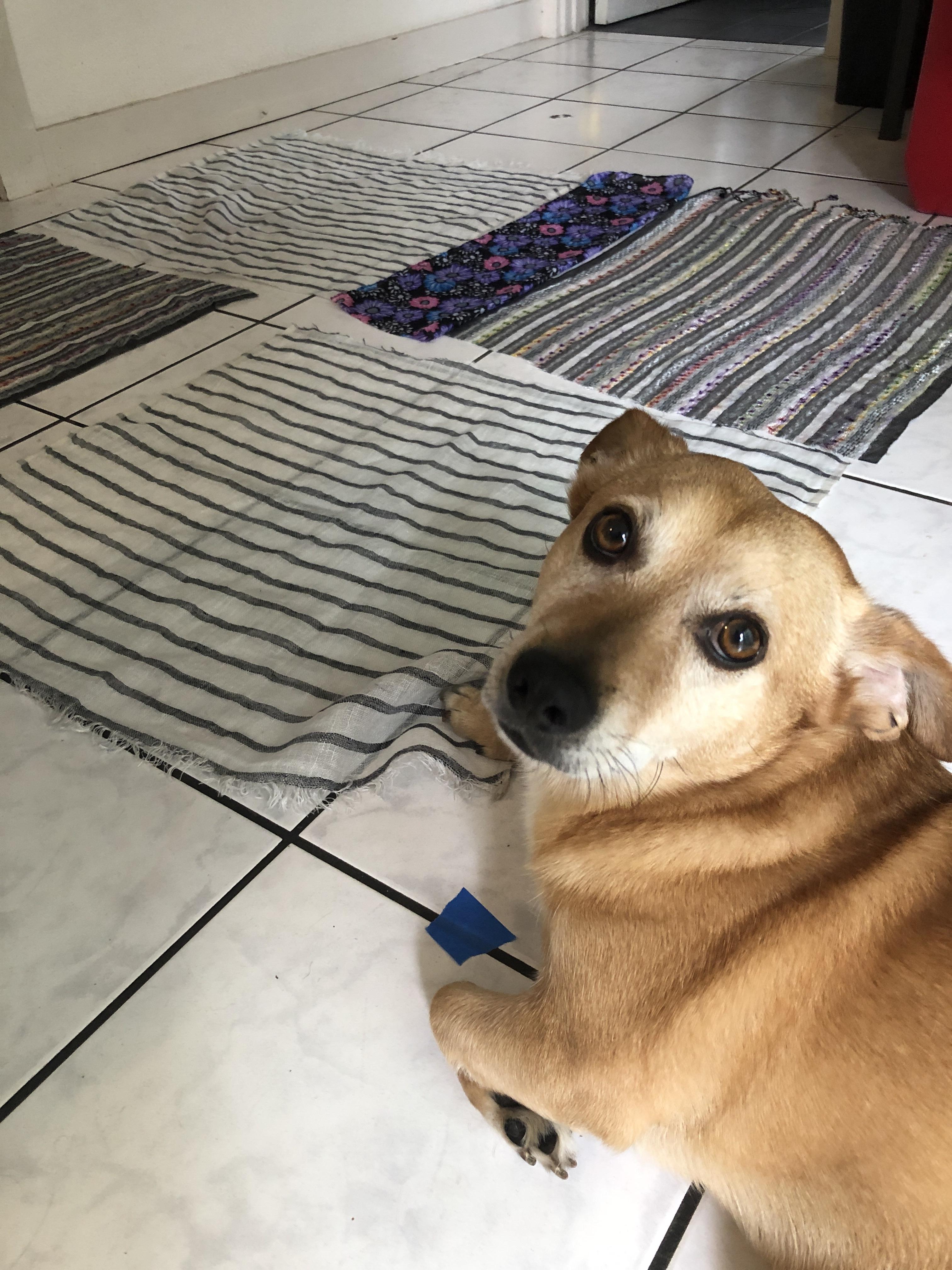 Corgi dog and fabric squares